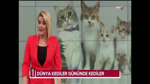 Kedi sahibi olmak ruh sağlığını nasıl etkiliyor?